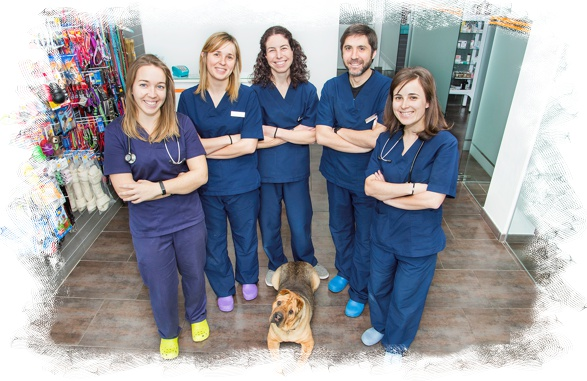 veterinarios